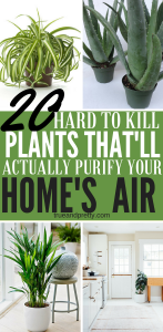 Click here to see the best air purifying plants that are super low maintenance and hard to kill.