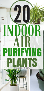 These 20 air purifying plants are THE BEST! I'm so glad I found these GREAT tips! Now I have some great ideas for low maintenance air purifying plants for my home! Definitely pinning!